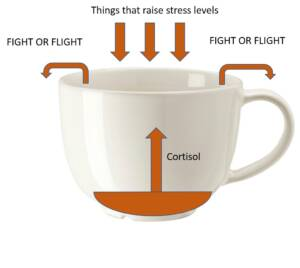 Anxiety symptoms in children stress cup